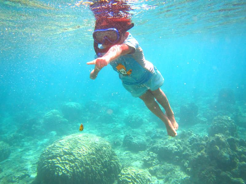 奄美大島&加計呂麻島 子連れのんびり旅行スケジュール