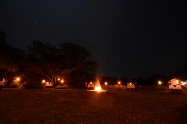 ウィルパットゥ国立公園近くのおすすめキャンプ・ビッグ ゲーム
