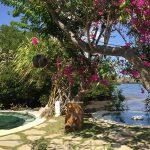 バリ島西部で温泉とマングローブ。そして…なにもしない休日を